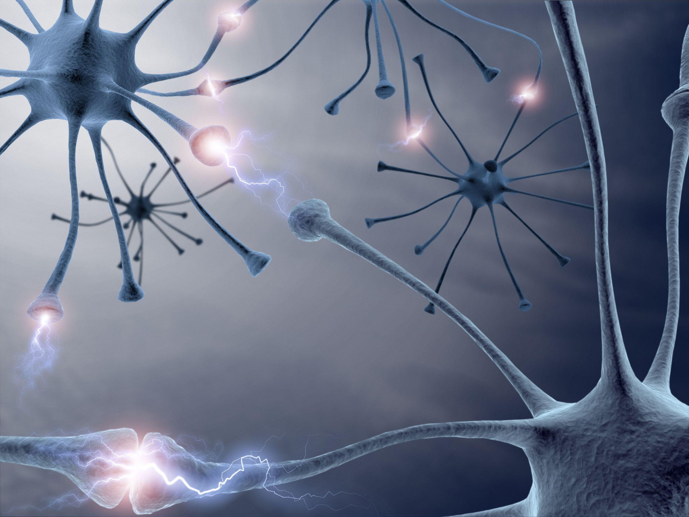Нервные клетки восстанавливаются секс 27 фотография